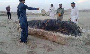 لاشه نهنگ